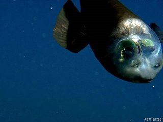 Weird Fish Head 4